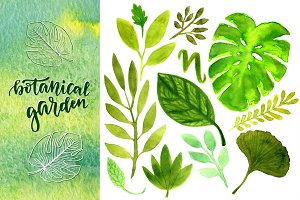 Watercolor green leaves & patterns