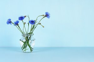 Blue cornflowers in glass jar
