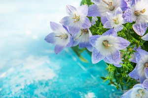 White and purple bell flower.