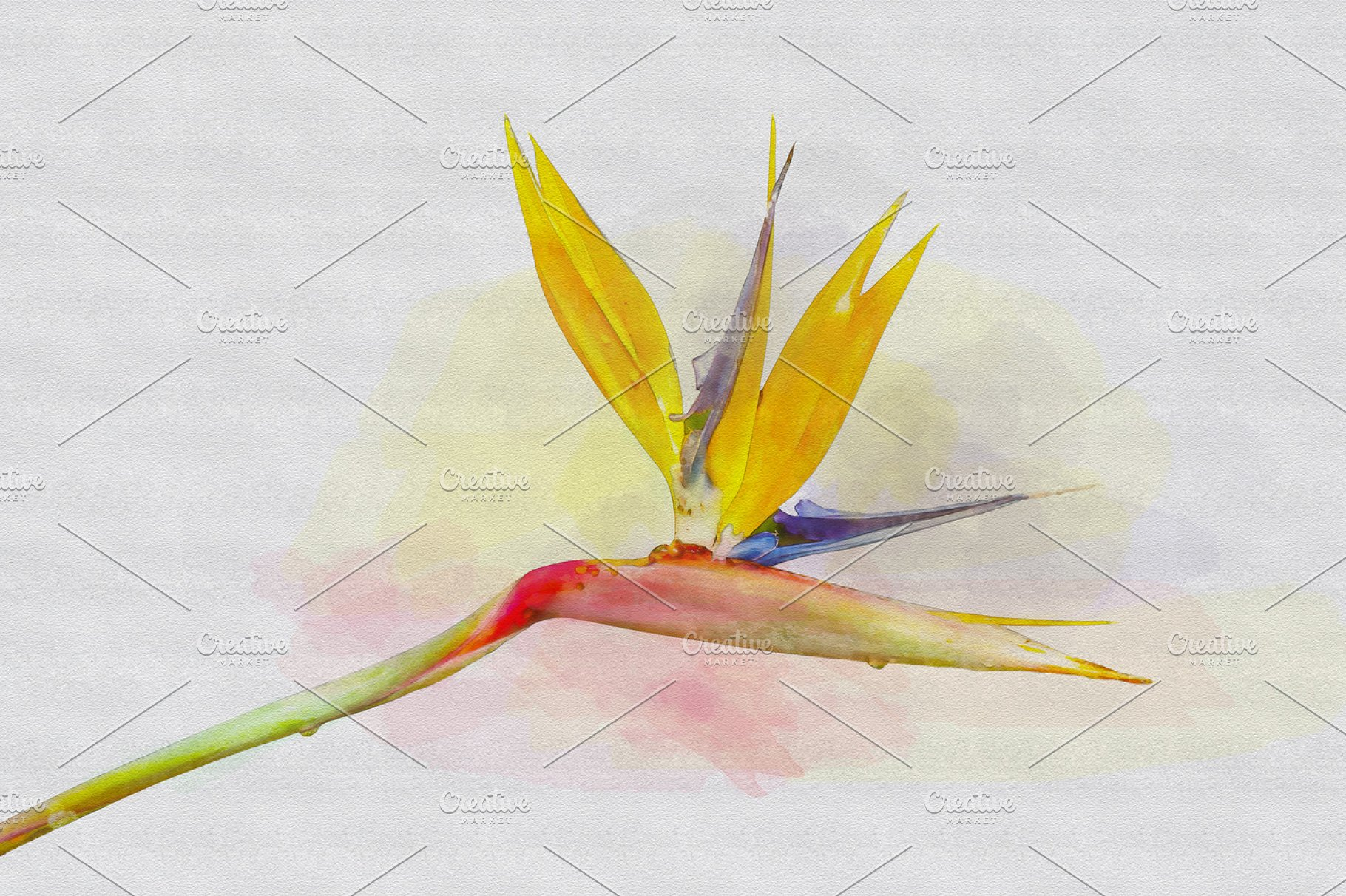 Bird Of Paradise Flower Water Best Flower Wallpaper