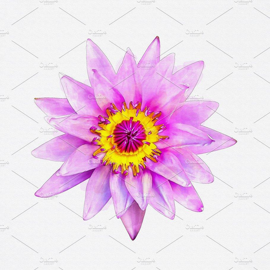 Lotus Flower Watercolor Arts Entertainment Photos Creative Market