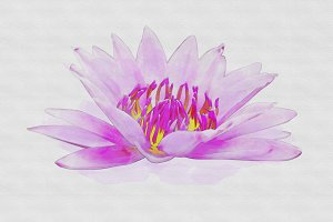 lotus flower watercolor.