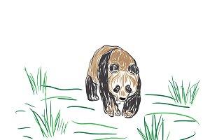 panda bear, sketch style