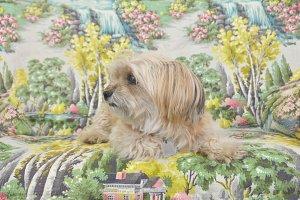 Sweet Dog Amidst Art ONE