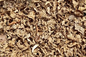 Dry leaf on the ground
