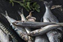 Raw fish. Sea bream, sea bass,
