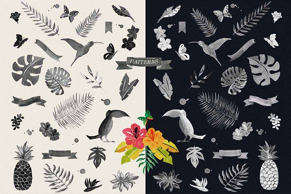 Jungle Tropical in Illustrations - product preview 4
