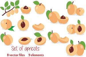 Apricot. Set apricots, pieces.