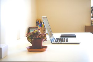 Laptop and flower pot
