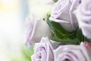 Bunch of violet roses