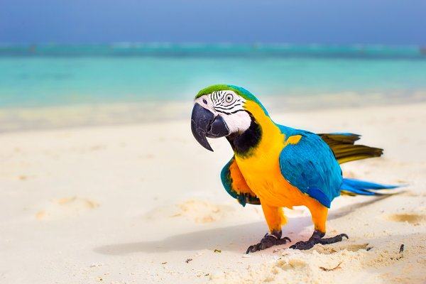 Closeup colorful bright parrot on w…