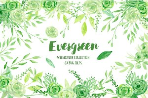 Watercolor Clipart Evergreen