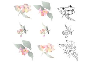 jasmin branches vector
