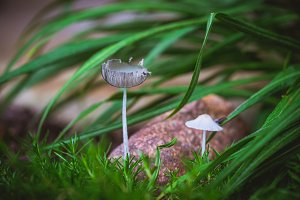 Two tiny toadstools