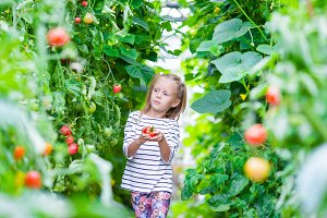 Little girl harvests cucumbers and tomatoes in greenhouse