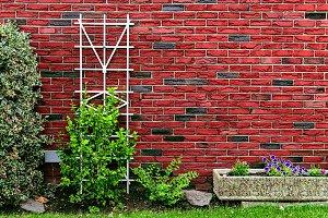Red brick wall at back yard