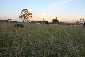 Lapangan Rumput