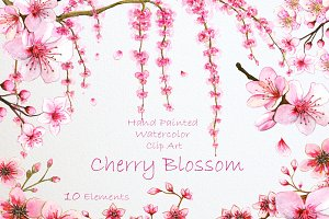Cherry Blossom. Watercolor Clip Art
