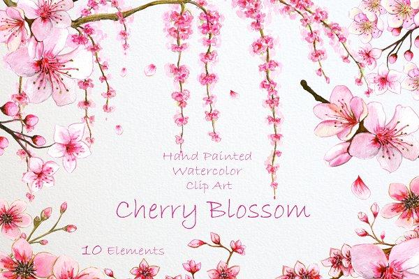 Cherry Blossom. Watercolor Clip Art
