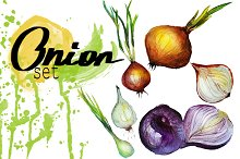watercolor   onions