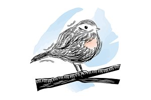 Robin Bird sitting branch. Vector