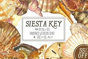 Siesta Key Watercolor Seashells