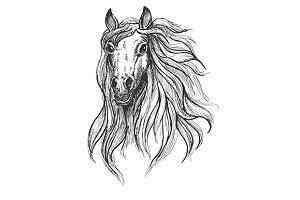 Wild horse mustang sketch