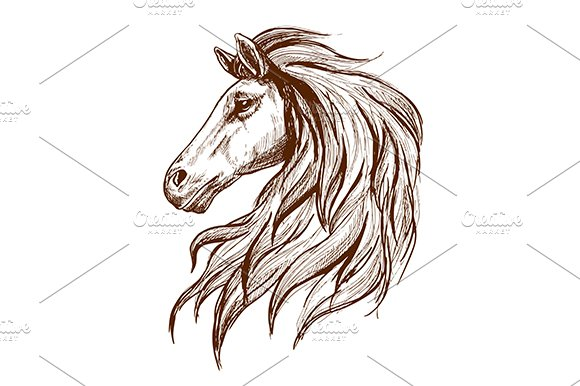 Gorgeous arabian racehorse in Graphics