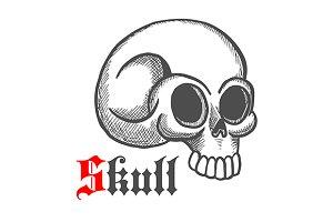 Vintage engraving skull