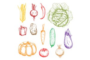 Autumnal ripe vegetables sketches