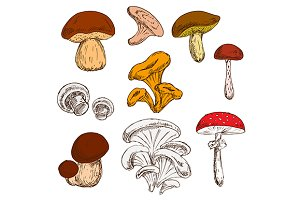 Mushrooms sketches