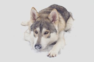 Northern Inuit in the Snow