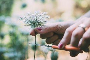 Woman hands cutting flower