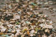 Fallen leaves on pavement
