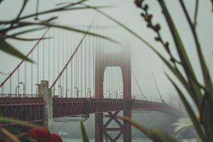 Golden Gate Bridge through flowers