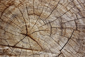 Timber Surface Texture Background
