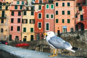 Sea Gull sitting on stone fence