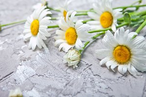 Summer Floral card with chamomile