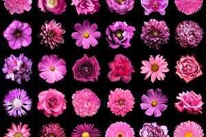 30 pink flowers isolated on black