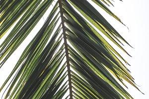 Palm leaves.