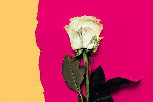 Rose Minimalism Art