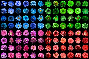 120 HQ flowers isolated on black