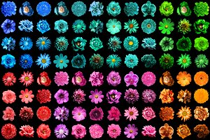 144 HQ flowers isolated on black
