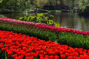 Park with tulips