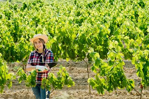 woman working in the vineyards