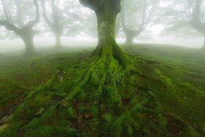 Belaustegi green forest
