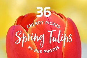 36 Spring Tulips - photo pack
