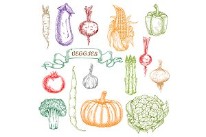 Engraving sketches of vegetables