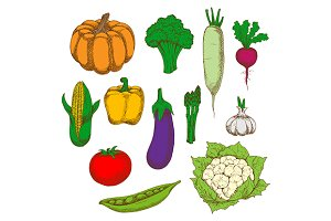 Colorful vegetables sketches