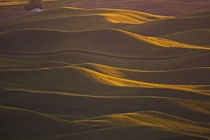 Sunset Wheat Fields